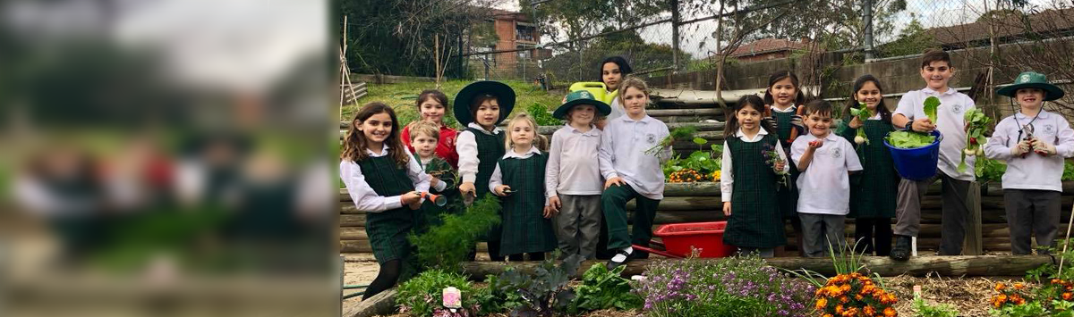 Students at Lane Cove Public School are enjoying the vegetable plantation activity